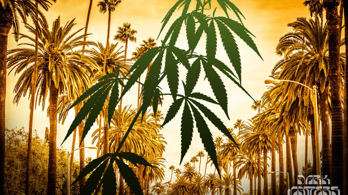 LA cannabis business