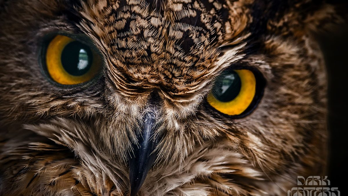 wise owl sees it all